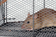 free Bedfordshire mouse removal quotes