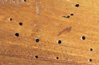save on  woodworm treatment