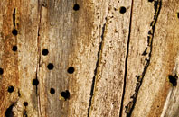 free  woodworm advice